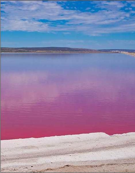 粉色湖泊手机壁纸