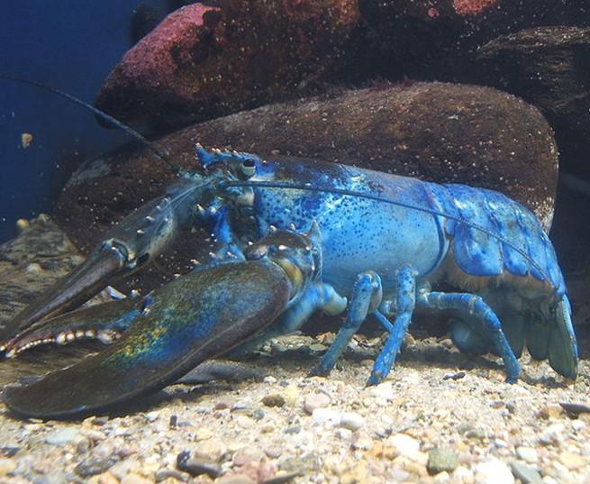 壁纸 动物 海底 海底世界 海洋馆 甲壳类 水族馆 655_537