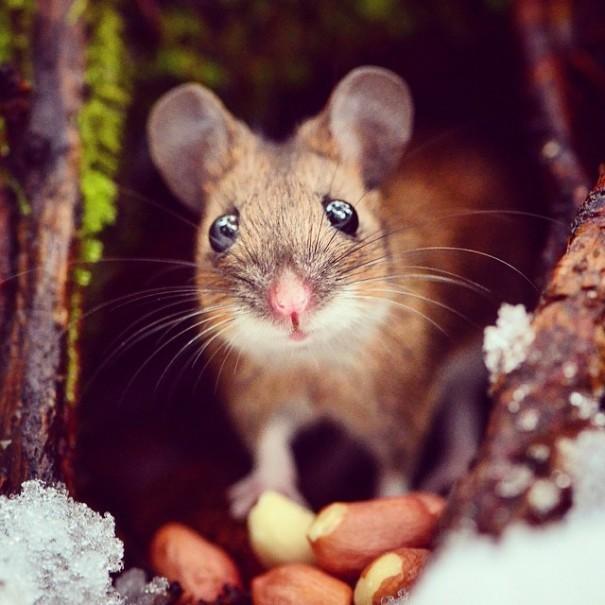 趣味摄影:呆萌可爱的动物吃货们